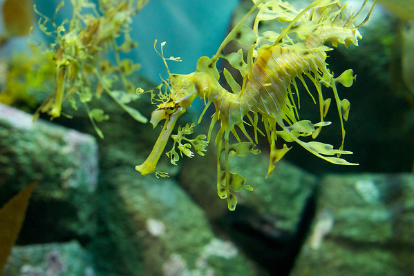 These were the strangest looking sea horses