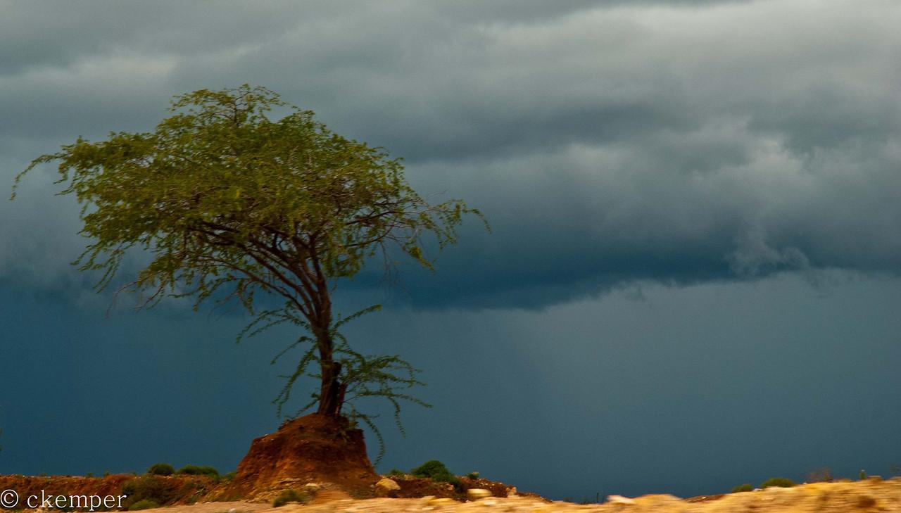 Storm Tree<br /> Sri Lanka