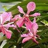 Kandi, botanical gardens