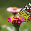 Butterfly - Norwood Bungalow