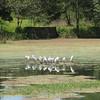 Polonnaruwa - birds