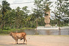 Cows and sacred statuary.