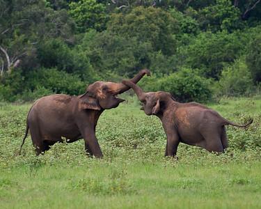 Kaudulla National Wildlife Park