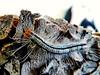Unidentified moth larva, Negombo