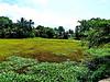 En route Negombo - Kaduwela