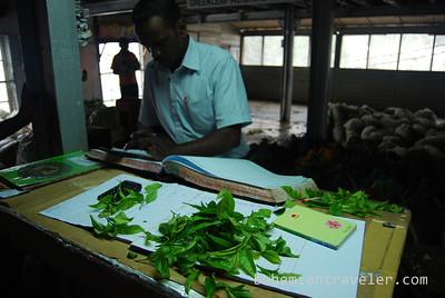 at Danbatenne Tea Factory