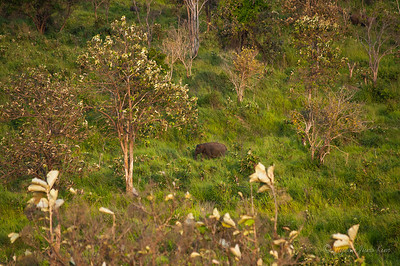 Male elephant spotted from the observation hut