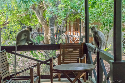 The ever-present monkeys required us to keep our door closed.  Otherwise, they would nip into our room in the blink of an eye and steel things - mostly food but often valuables too.