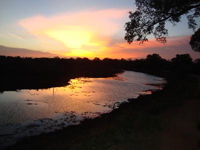 Safari (Yala National Park)