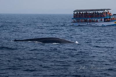Blue Whale, Merissa