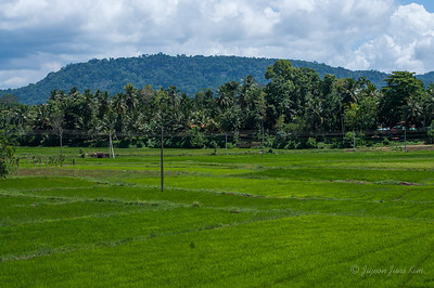 Rice paddies along the way to Anjanapura