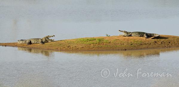 Crocodiles, Yala