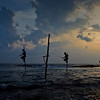 Stilt Fishing in Weligama, Sri Lanka