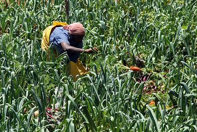Farming - Nuera Elia
