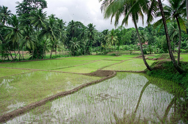 SRI LANKA 287