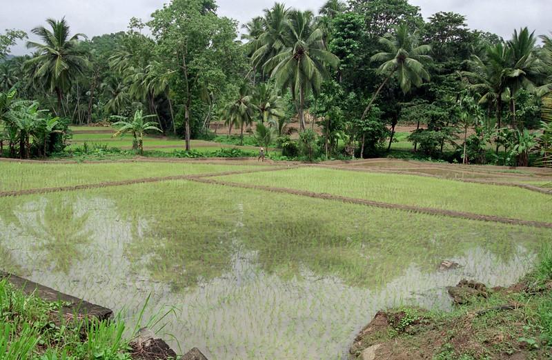 SRI LANKA 286