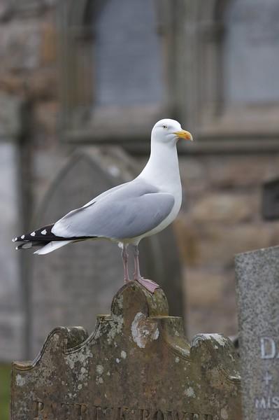 Fauna local de la costa y en el cementerio.