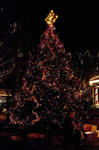 •Night Lights in St Augustine<br /> • Christmas Tree
