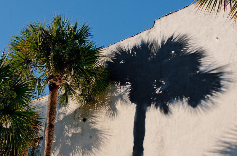 I just like the tree with its shadow on the wall