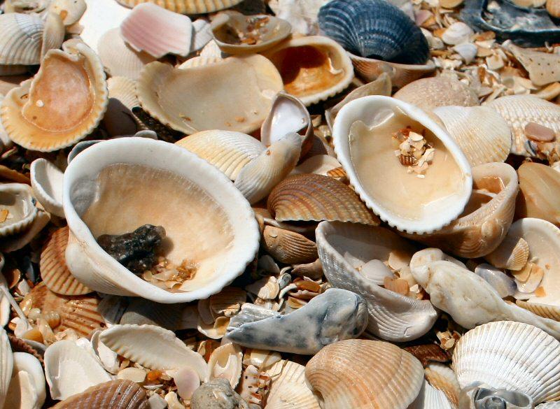 Img_4302-seashells