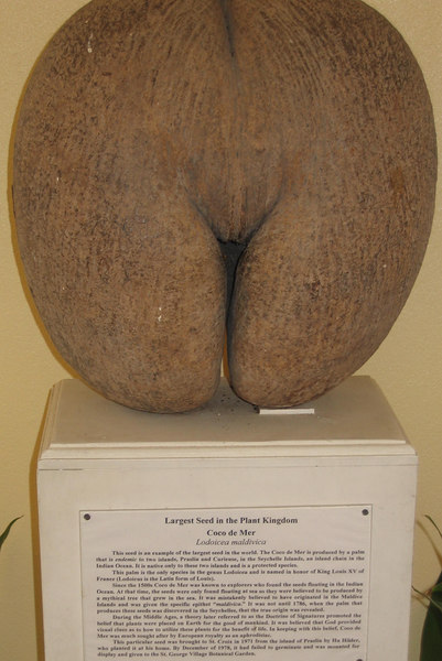 Coco de Mer seed (World's largest seed)