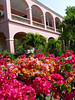 Beautiful flowers along the drive at the main house on the resort.