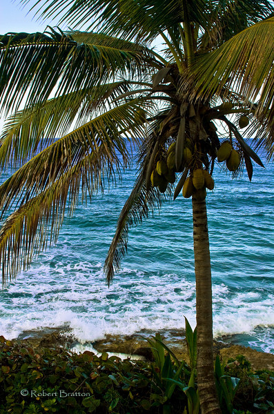 Palm Tree by the Water