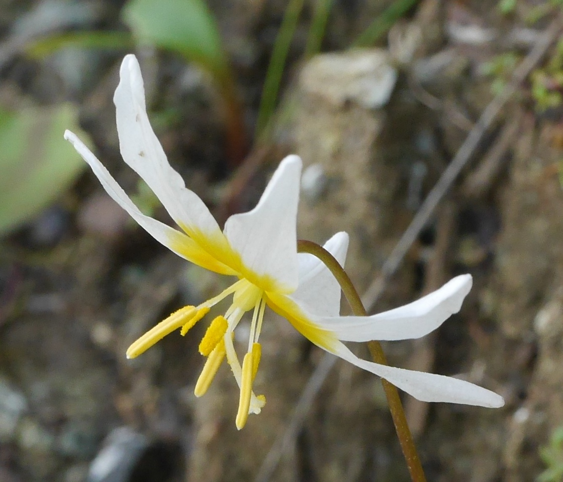The fawn lily shapes were also very striking.