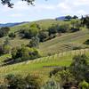 Kuleto vineyards