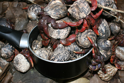 Hermit crabs clean the cooking pot.