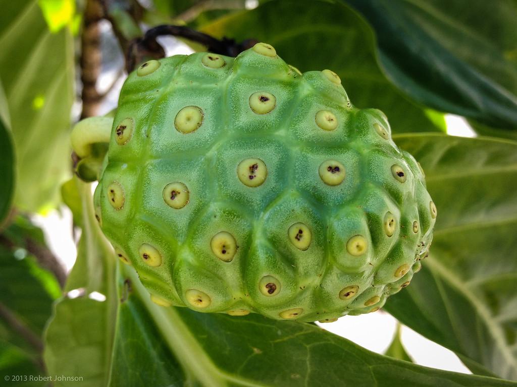Medicinal fruit