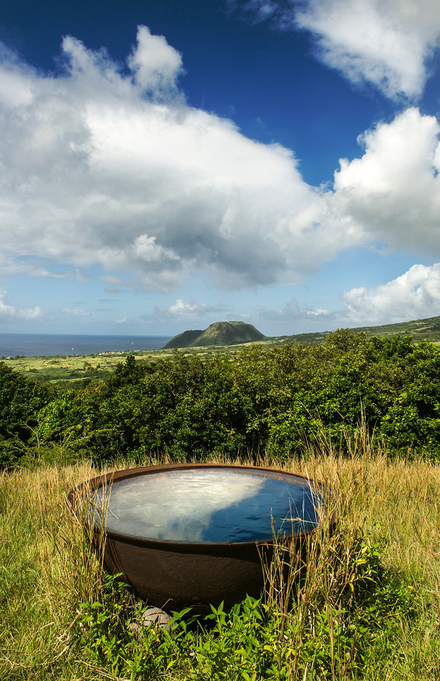 Kettles once used to boil the sugar to molasses now water cattle on the hills near Old Roads, St Kitts- Brimstone Hill Fortress in the distance