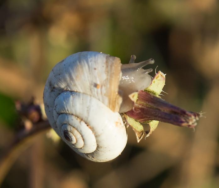 Snail on a vine