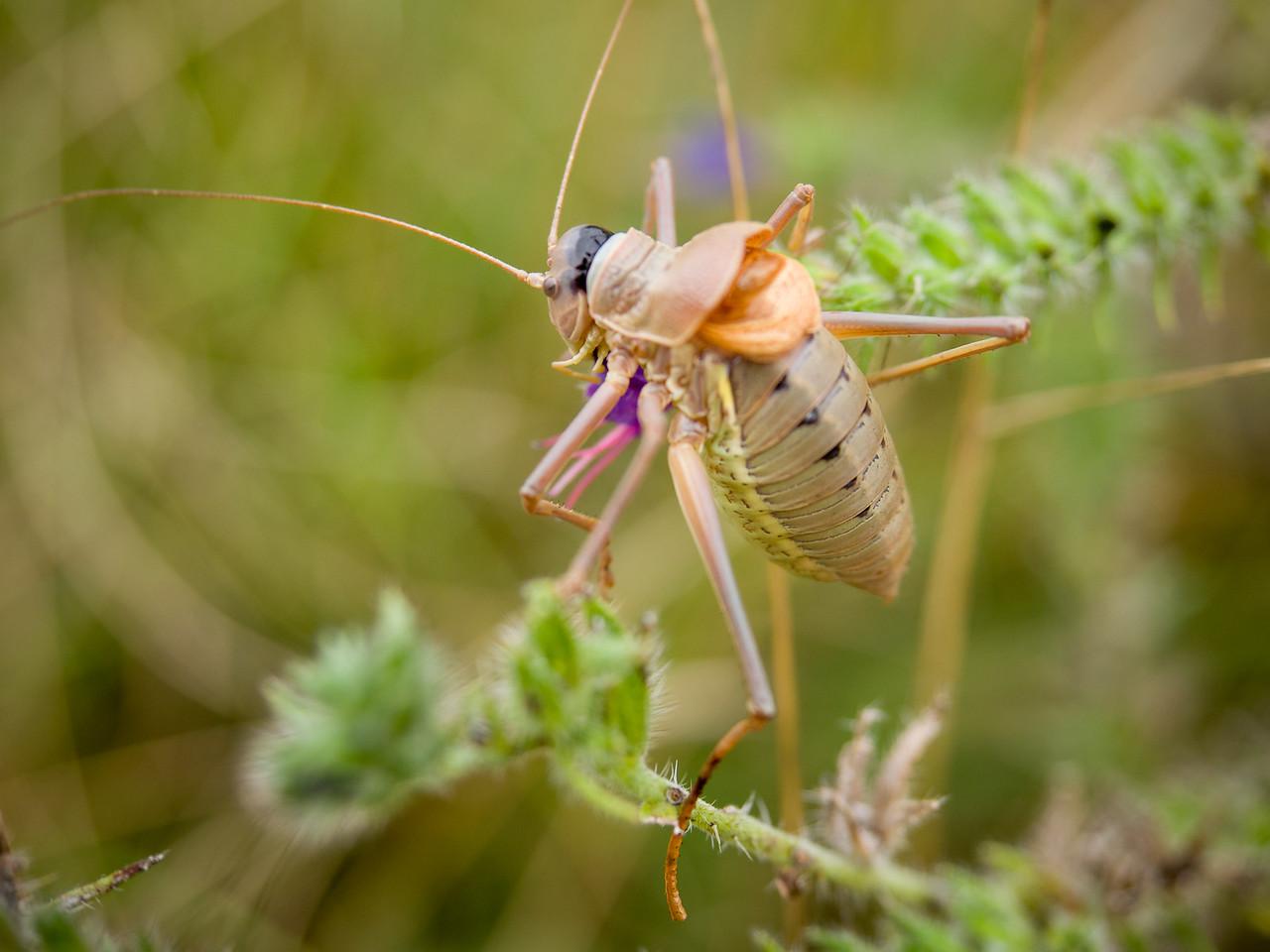 A Cricket - I think