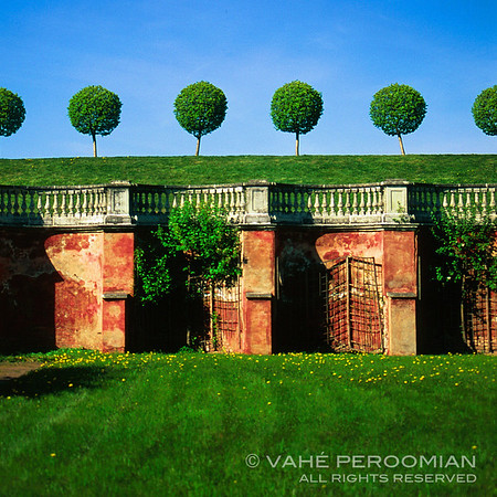 Trees and Wall, Peterhof Palace Gardens