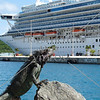 Iguana and cruise ship at St Thomas, US Virgin Islands.