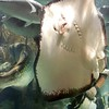 Coral World Stingray in St Thomas USVI  11/19/06
