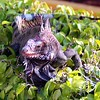 Iguana on shrubs at Havensight Pier in St Thomas USVI  11/19/06