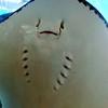 Stingray at Coral World, St Thomas, USVI  11/19/06