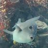 Fish at Coral World in St Thomas USVI on 11/19/06