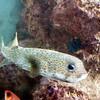 Fish at Coral World, St Thomas, USVI 11/19/06