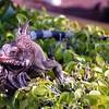 Iguana at Havensight Pier, St Thomas, USVI, 11/19/06