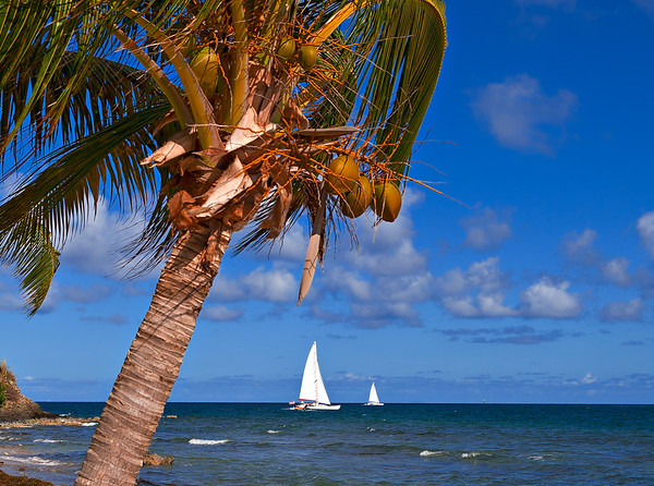 Great_Day_for_Sailing_21210-66_photo_by_Ted_Davis_310-430-2639