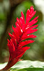 Ginger_Flower_10603_84_Ted Davis_310-860-6001