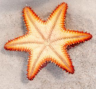 Starfish_Upsidedown_in_water_photo_by_Ted_Davis_310-860-6001