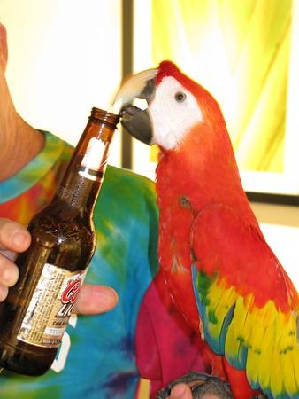 Parrots visit D&D Studio