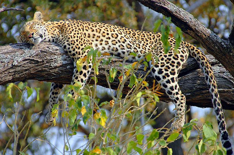 Stanley's Camp, Okavango Delta, Botswana, Africa