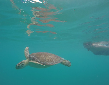 Judi and Green turtle a GoPro movie shot