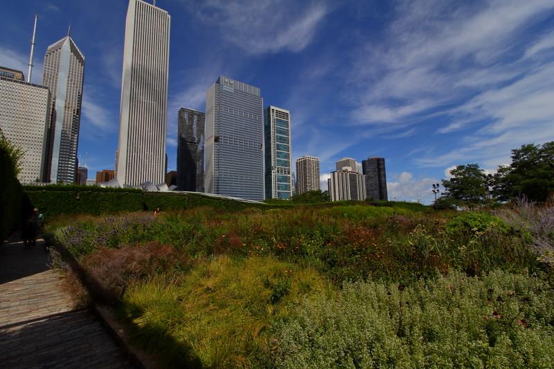 View from Millennium Park