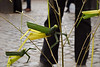 Chinese street artisan with bamboo insects